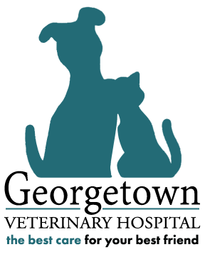 Georgetown Veterinary Hospital Logo
